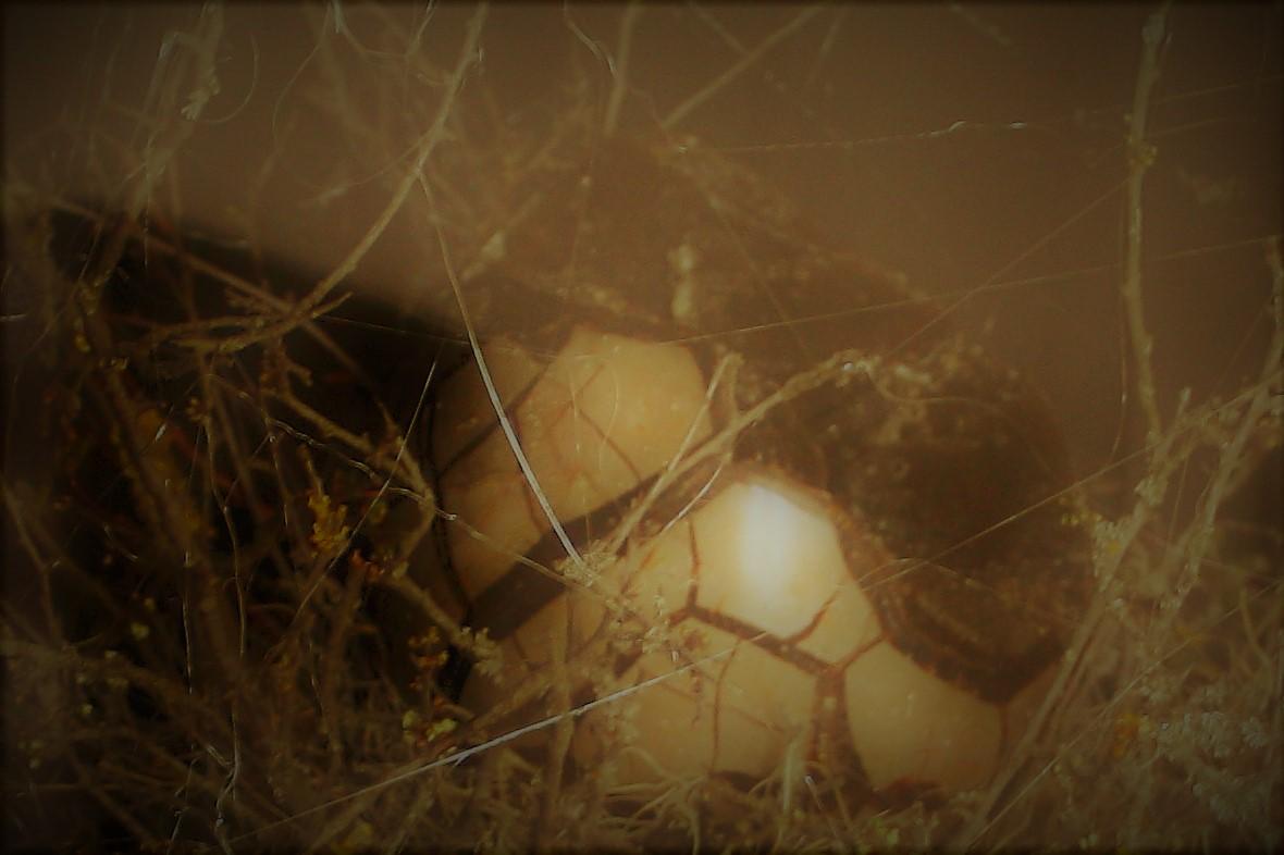 Dračí vejce Zlatokopa Henryho- počátek